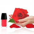Rose in woman hand, red nail polish and lipstick isolated on whi — Stock Photo