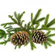 Foto Stock: Branch of Green Christmas tree with cones isolated on white