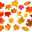 Collection beautiful colourful autumn leaves isolated on white b — Stock Photo #13865648