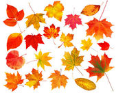 Collection beautiful colourful autumn leaves isolated on white b — Stock Photo