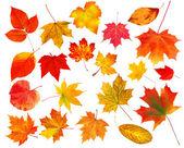 Kolekcja pięknych kolorowych liści jesienią na białym tle na b biały — Zdjęcie stockowe