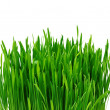 Green grass over white background — Stok fotoğraf
