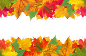 Autumn leaves frame over white for your text — Stock Photo