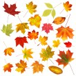 Collection beautiful colourful autumn leaves isolated on white b — ストック写真