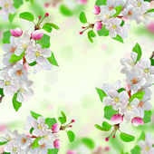 Spring blossom on nature background — Stock Photo