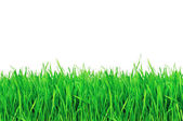 Green grass isolated on a white background — Stock Photo