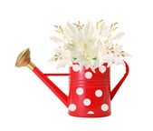 Red polka dot watering can and white lilly isolated on white — Stock Photo