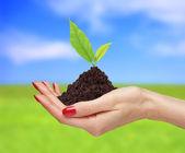 女人的手缓缴明亮的自然背景的绿色的植物 — 图库照片
