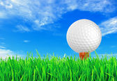 Golf ball on the green grass of the golf course — Stock fotografie