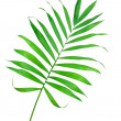 Green leaf of fern isolated on white — Stock Photo #45710915