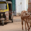 Indian holy cow and ricksha in the street — Stock Photo #46044289