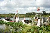 Everglades - Florida — Stock Photo
