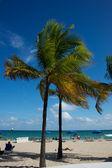 Florida,Usa — Stock Photo