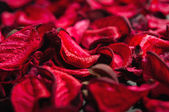 Spa background of dried petals of red roses — Stock Photo