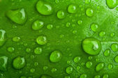 Green abstract background. drops of dew on a leaf — Stock Photo