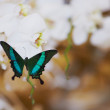 Butterfly on wedding flowers — Stock Photo