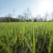 Camera moves toward the sun through the spring the young grass in the industrial zone — Stock Video #31968059