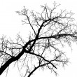 Big bare branch cutout — Stock Photo