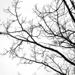 Bare tree against the overcast sky — Foto de Stock