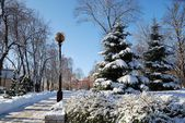 The snow-covered park alley near Kiev State University — Stock Photo