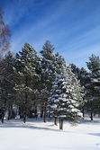 Winter park covered with snow in Truskavets — 图库照片