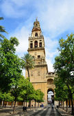 Huge patio of the Mosque-Cathedral in Cordoba — Stock Photo