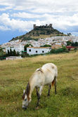 Spanish landscape with a castle and a horse — Stock Photo