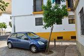 木の近くに駐車していた車 — ストック写真