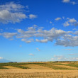 Spanish agricultural view — Stock Photo