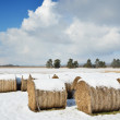 Straw bales in the winter field — Stock Photo