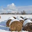 Straw bales in the winter field — Stock Photo #32148413