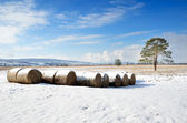 Winter field with straw bales — Stock Photo