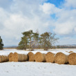 Winter field with straw bales — Stock Photo #37160567