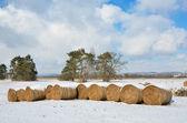 Winter veld met strobalen — Stockfoto