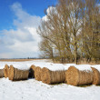 Winter meadow with straw bales — Stock Photo