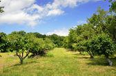 Fruit garden — Stock Photo