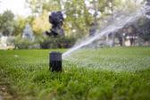Irrigation of garden — Stock Photo