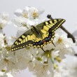 Yellow butterfly — Stock Photo #45858087