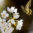 Yellow butterfly — Stock Photo #45858691