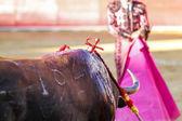 Spanish bull — Stok fotoğraf