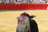 Spanish bull — Stock Photo