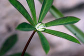Water drop in leaves — Stock Photo