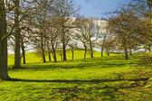 春の山の側に木 — ストック写真