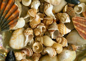 Conchas do mar — Fotografia Stock