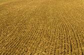 Ploughed field — Стоковое фото