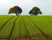 Trees on the hillside — Stock Photo