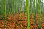 Podzim v lese — Stock fotografie