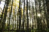 秋の木々 を通して輝く太陽 — ストック写真