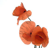 Farded red poppy — Stock Photo