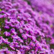 Purple flower — Stock Photo #33661589